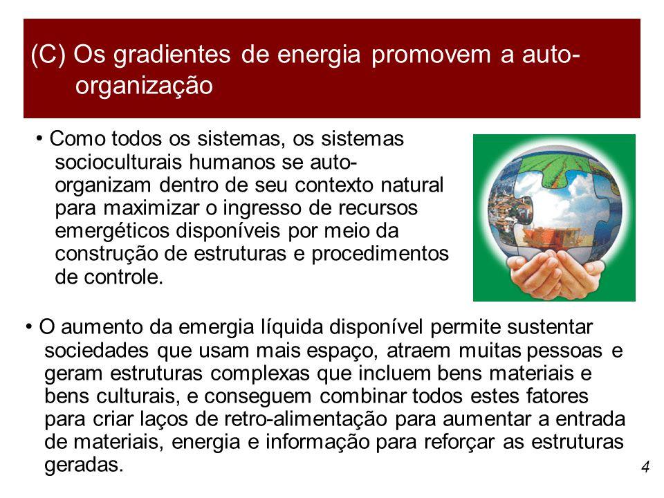 (C) Os gradientes de energia promovem a auto-organização