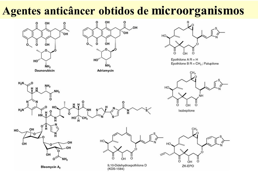 Agentes anticâncer obtidos de microorganismos