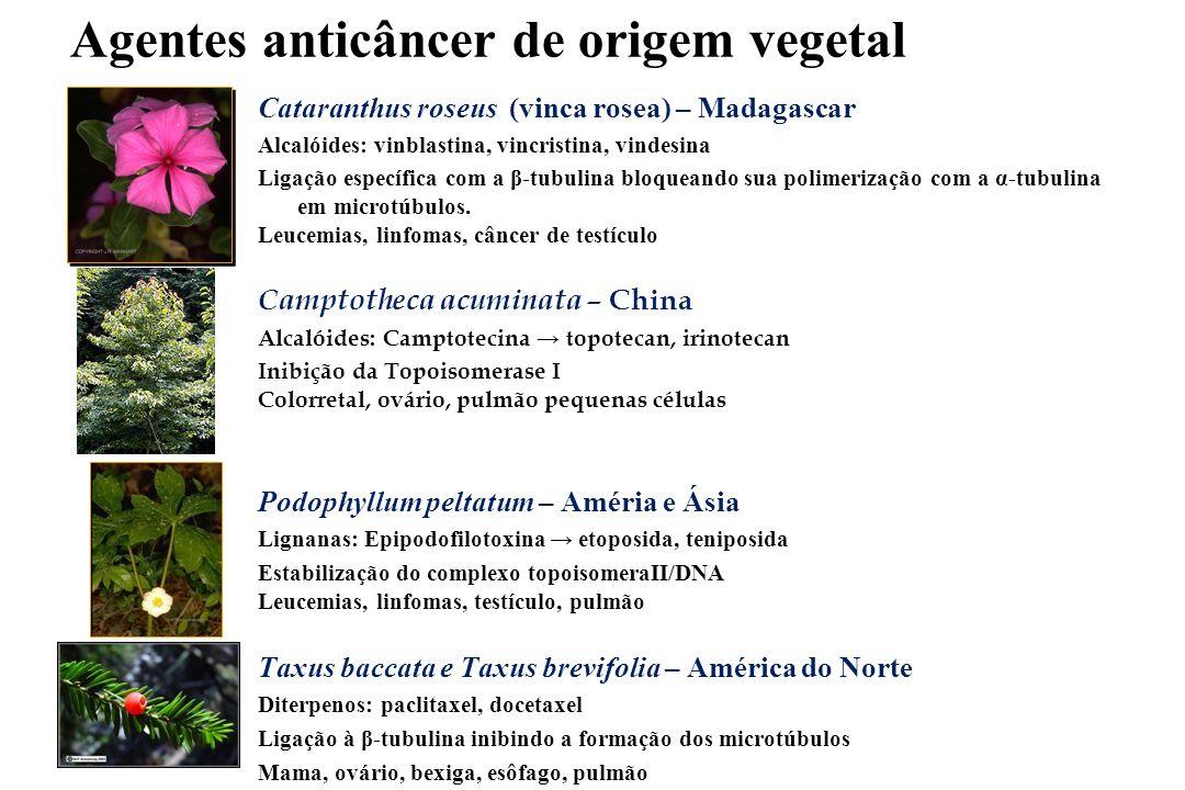 Agentes anticâncer de origem vegetal