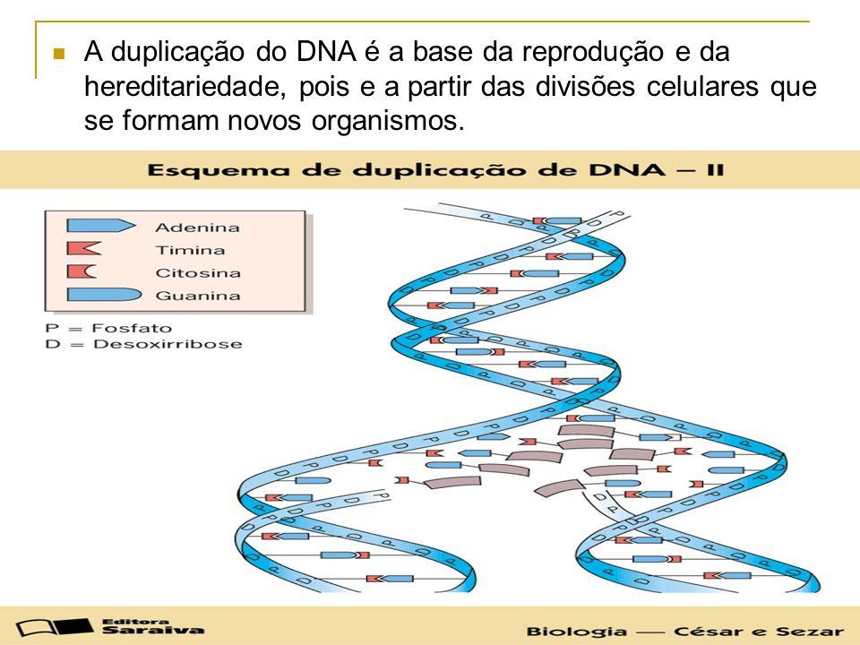 A duplicação do DNA é a base da reprodução e da hereditariedade, pois e a partir das divisões celulares que se formam novos organismos.