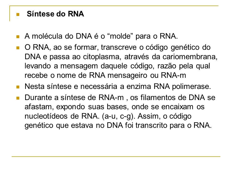 Síntese do RNA A molécula do DNA é o molde para o RNA.