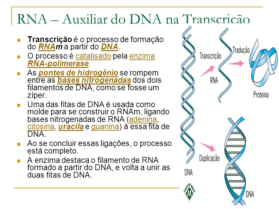 RNA – Auxiliar do DNA na Transcrição