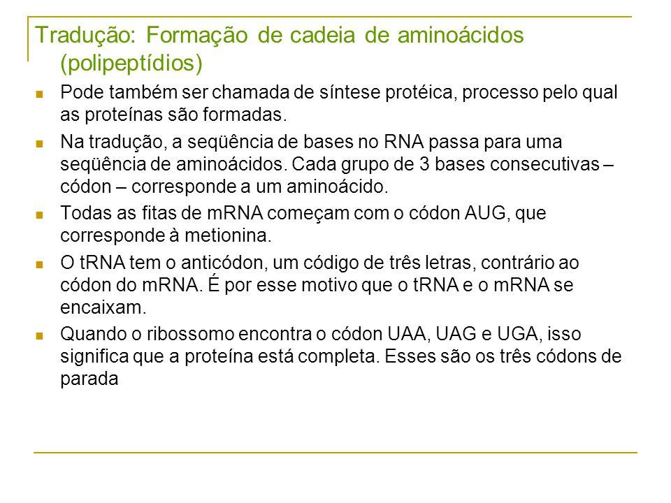 Tradução: Formação de cadeia de aminoácidos (polipeptídios)