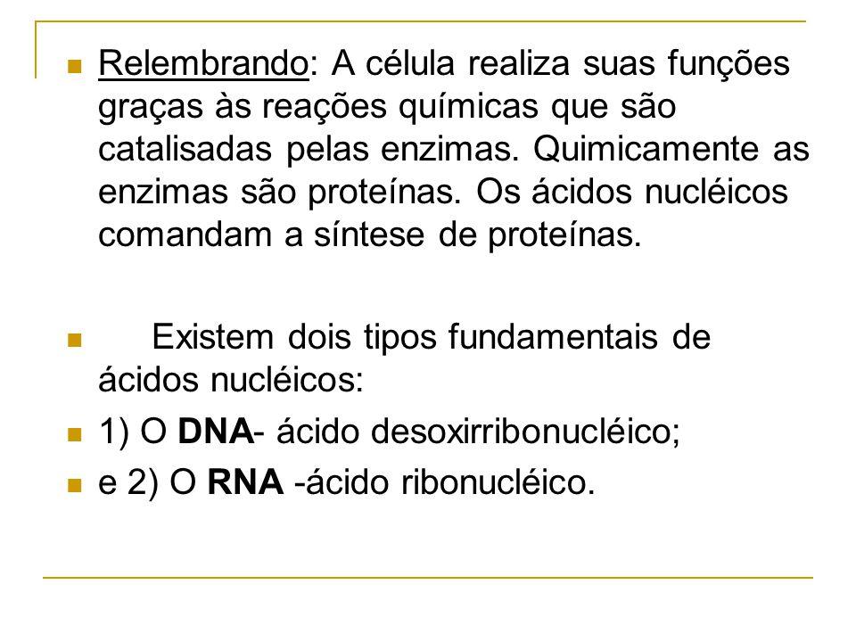 Relembrando: A célula realiza suas funções graças às reações químicas que são catalisadas pelas enzimas. Quimicamente as enzimas são proteínas. Os ácidos nucléicos comandam a síntese de proteínas.