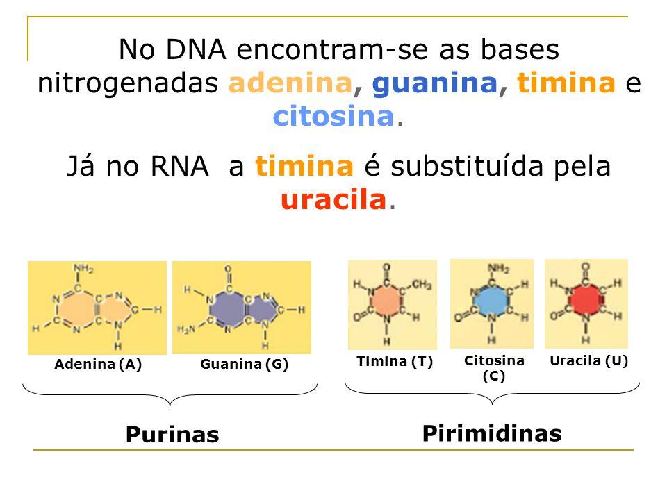 Já no RNA a timina é substituída pela uracila.