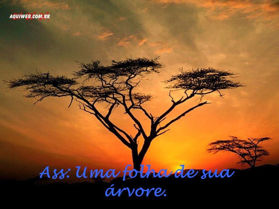 Ass: Uma folha de sua árvore.
