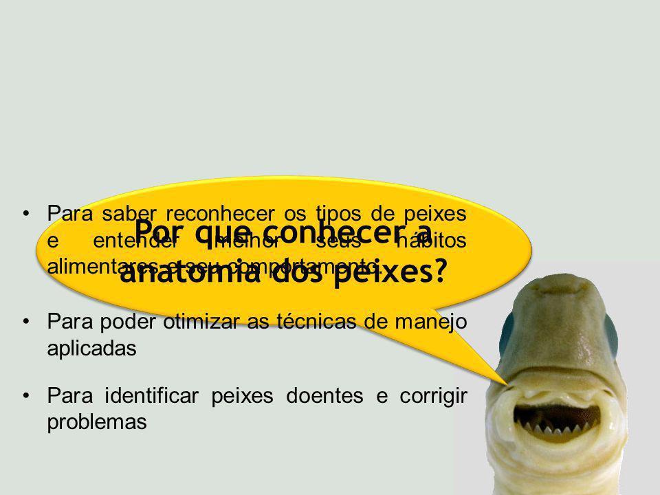 Por que conhecer a anatomia dos peixes