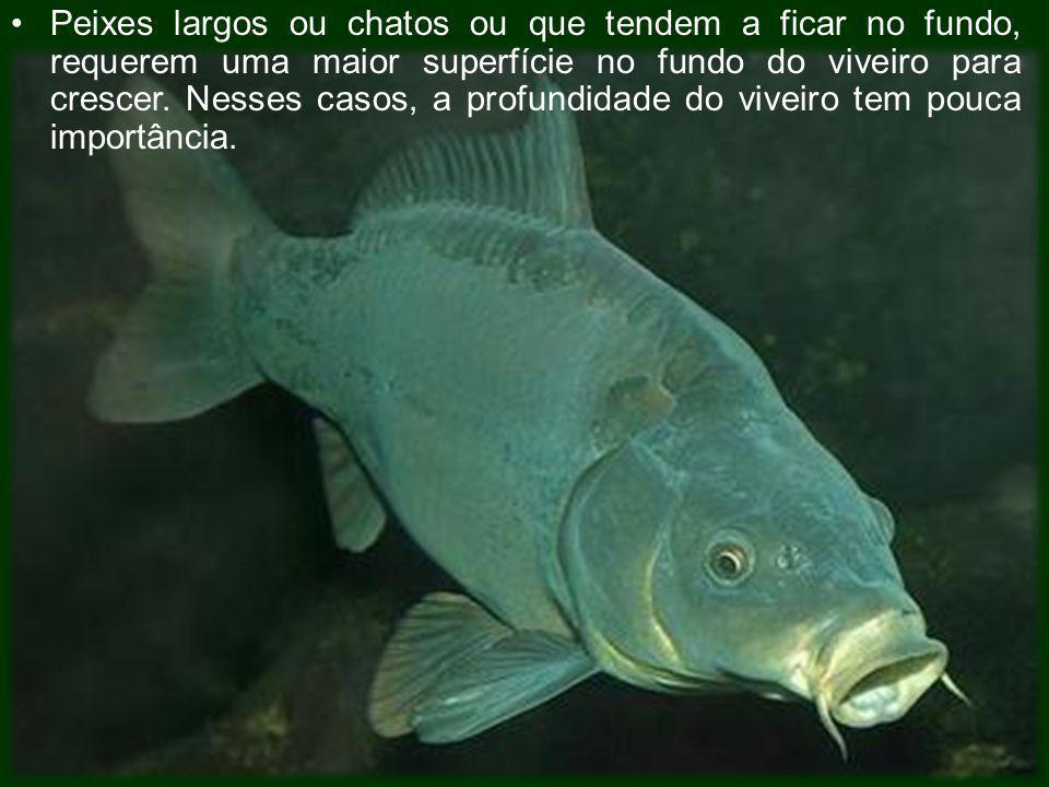 Peixes largos ou chatos ou que tendem a ficar no fundo, requerem uma maior superfície no fundo do viveiro para crescer.