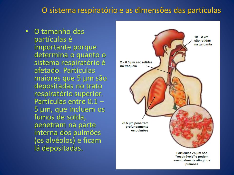 O sistema respiratório e as dimensões das partículas
