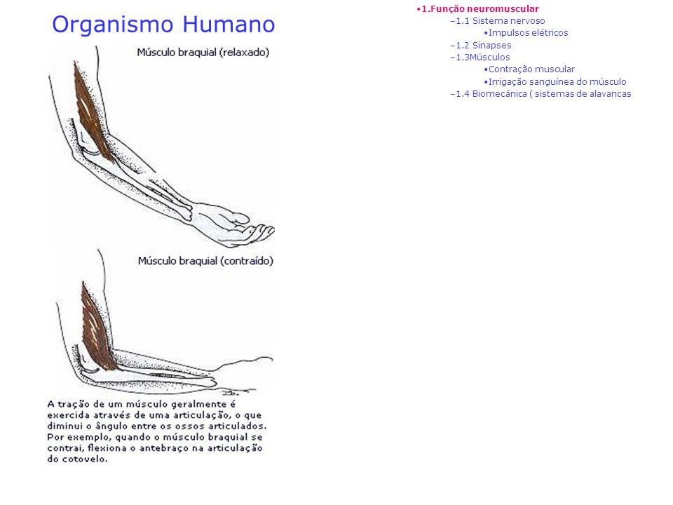 Organismo Humano 1.Função neuromuscular 1.1 Sistema nervoso