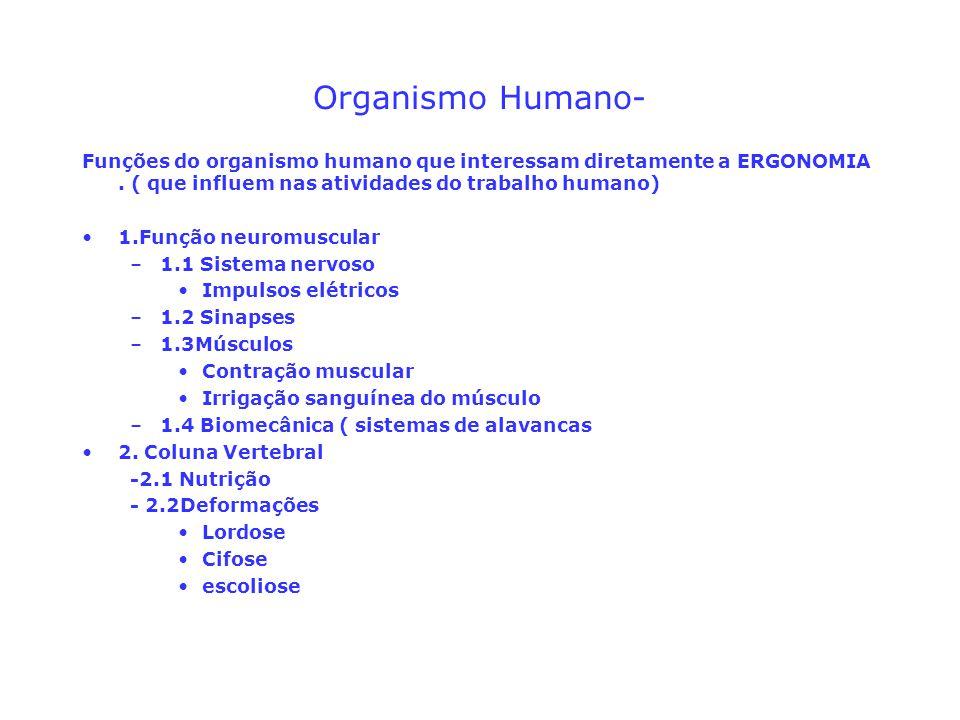 Organismo Humano- Funções do organismo humano que interessam diretamente a ERGONOMIA . ( que influem nas atividades do trabalho humano)