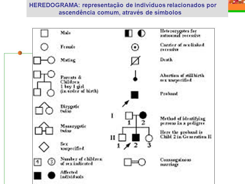 HEREDOGRAMA: representação de indivíduos relacionados por