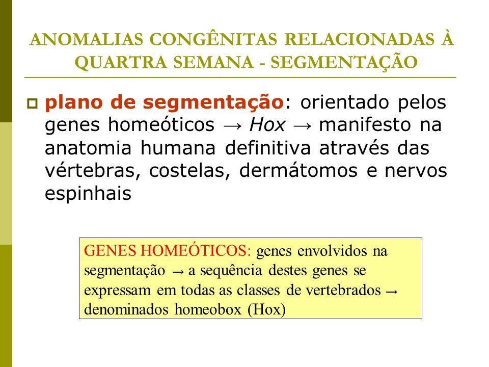ANOMALIAS CONGÊNITAS RELACIONADAS À QUARTRA SEMANA - SEGMENTAÇÃO