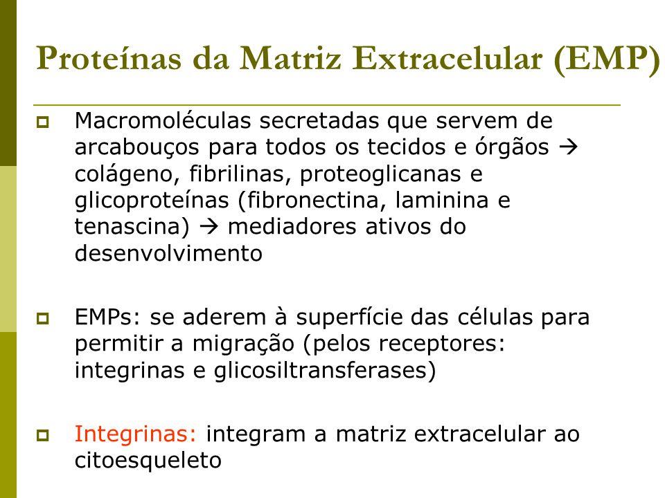 Proteínas da Matriz Extracelular (EMP)