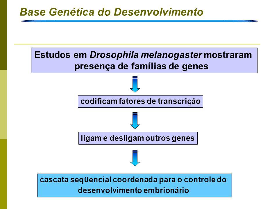 Base Genética do Desenvolvimento Introdução