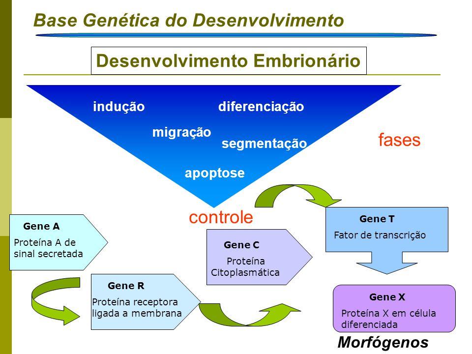 Base Genética do Desenvolvimento