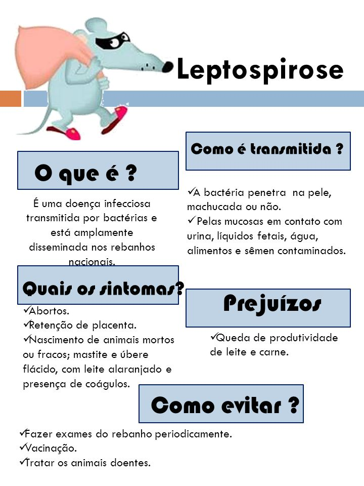 Leptospirose O que é Prejuízos Como evitar Quais os sintomas