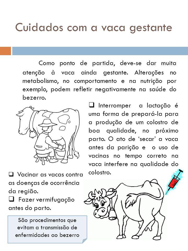 Cuidados com a vaca gestante