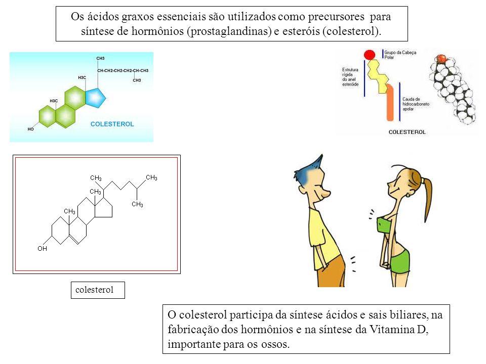 Os ácidos graxos essenciais são utilizados como precursores para síntese de hormônios (prostaglandinas) e esteróis (colesterol).