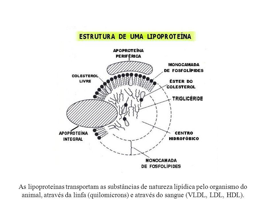As lipoproteínas transportam as substâncias de natureza lipídica pelo organismo do animal, através da linfa (quilomicrons) e através do sangue (VLDL, LDL, HDL).