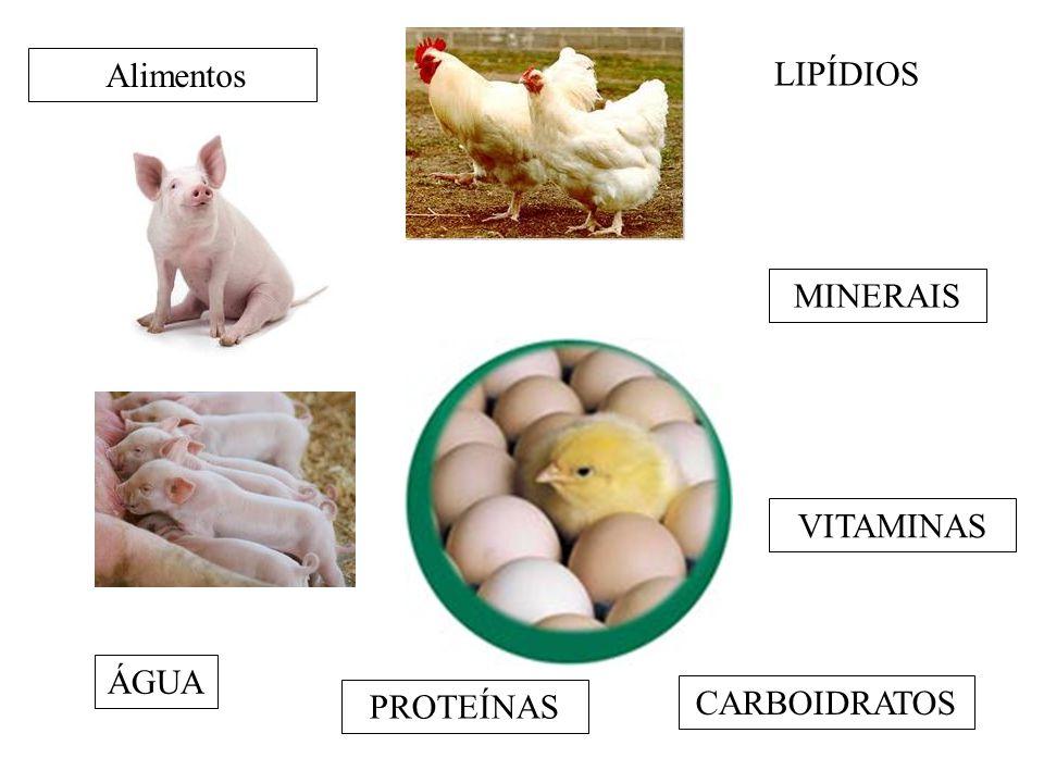 Alimentos LIPÍDIOS MINERAIS VITAMINAS ÁGUA PROTEÍNAS CARBOIDRATOS