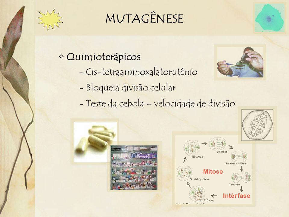 MUTAGÊNESE Quimioterápicos - Cis-tetraaminoxalatorutênio