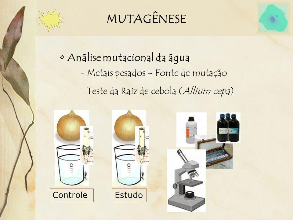 MUTAGÊNESE Análise mutacional da água