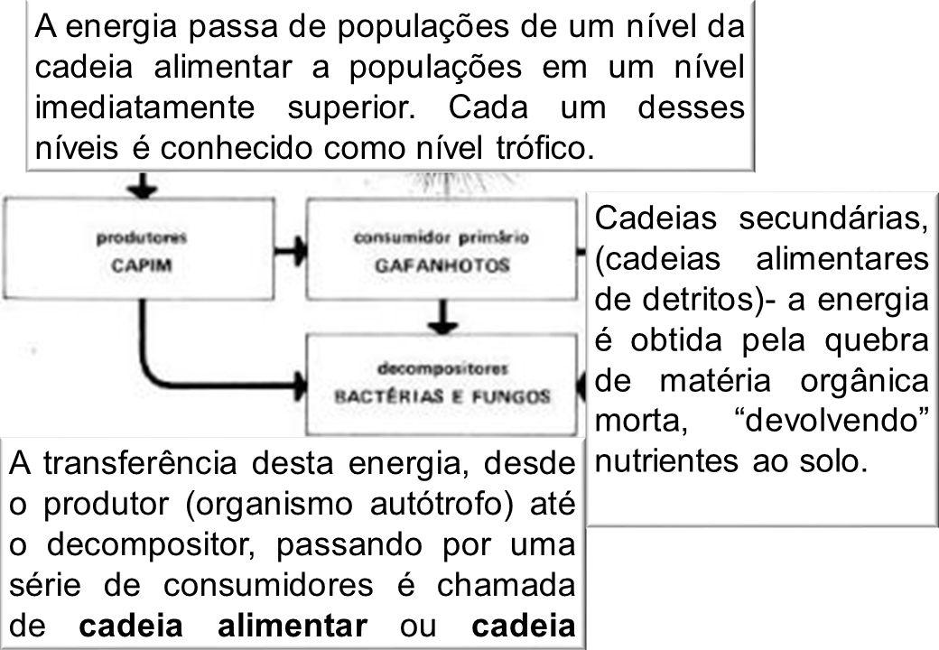 A energia passa de populações de um nível da cadeia alimentar a populações em um nível imediatamente superior. Cada um desses níveis é conhecido como nível trófico.
