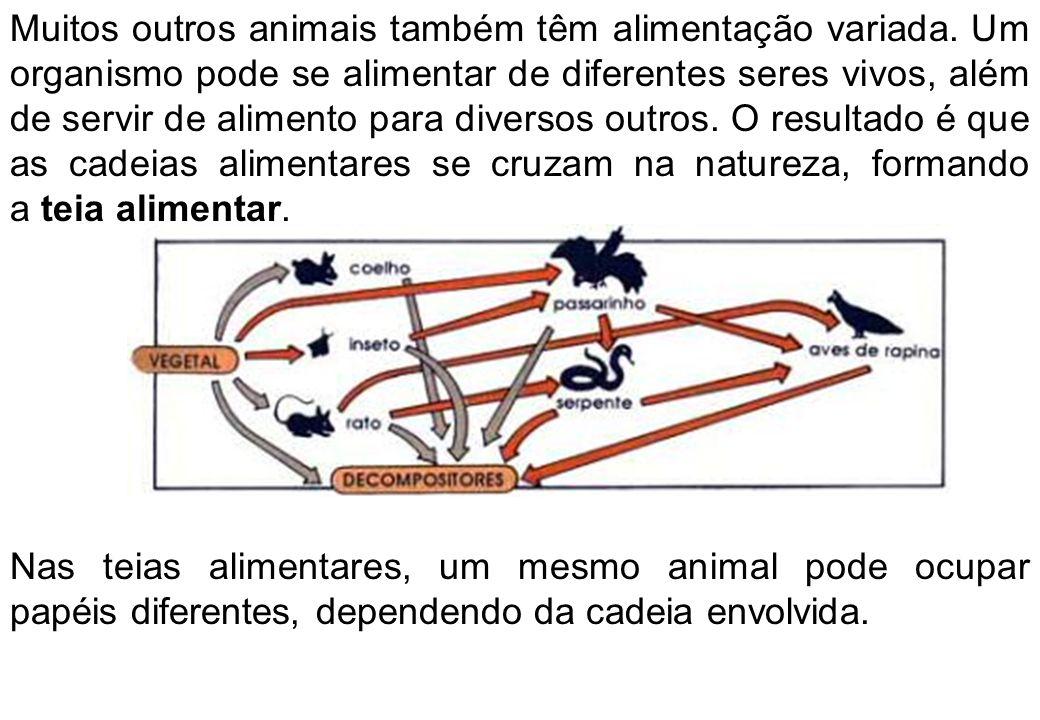 Muitos outros animais também têm alimentação variada