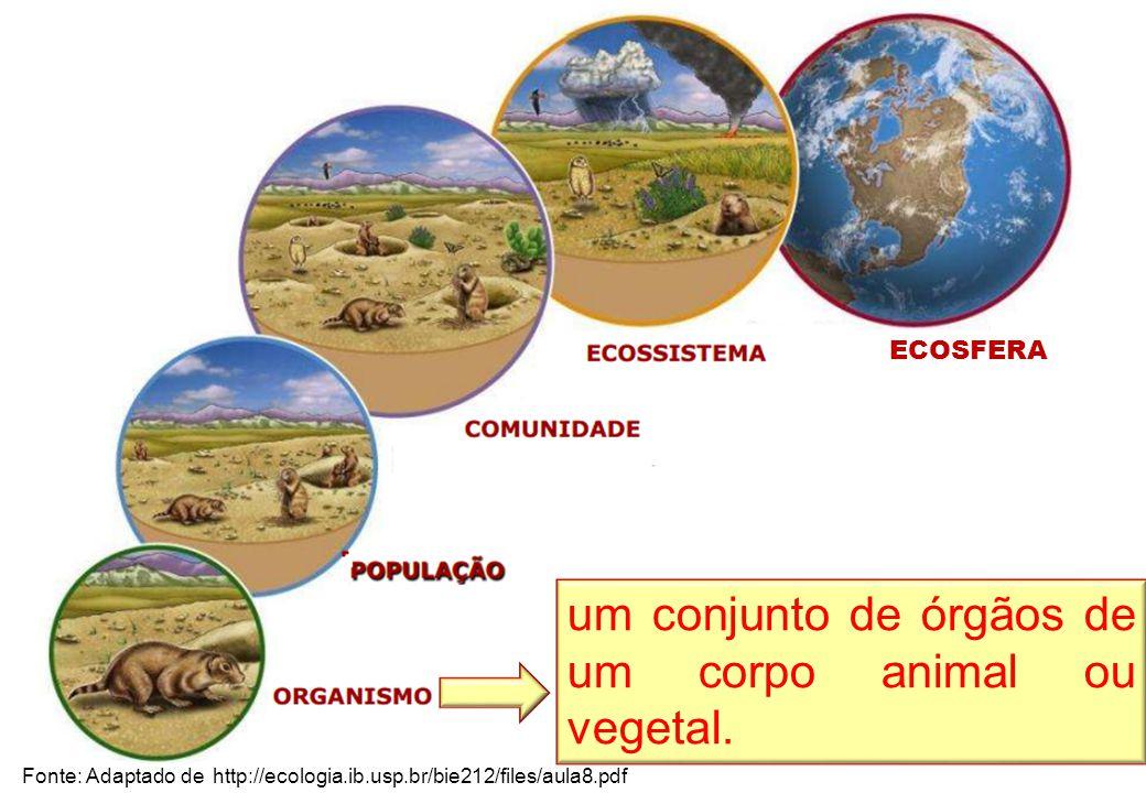 Fonte: Adaptado de http://ecologia.ib.usp.br/bie212/files/aula8.pdf