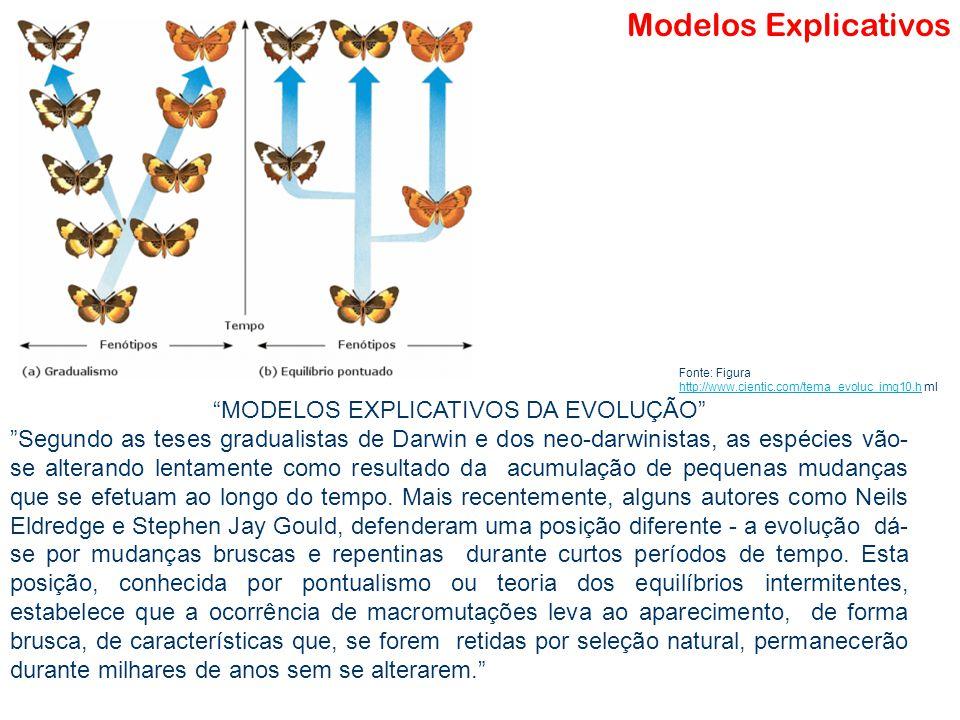 MODELOS EXPLICATIVOS DA EVOLUÇÃO