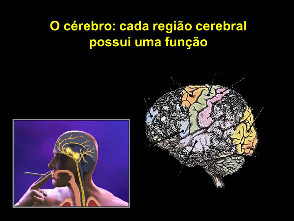 O cérebro: cada região cerebral possui uma função