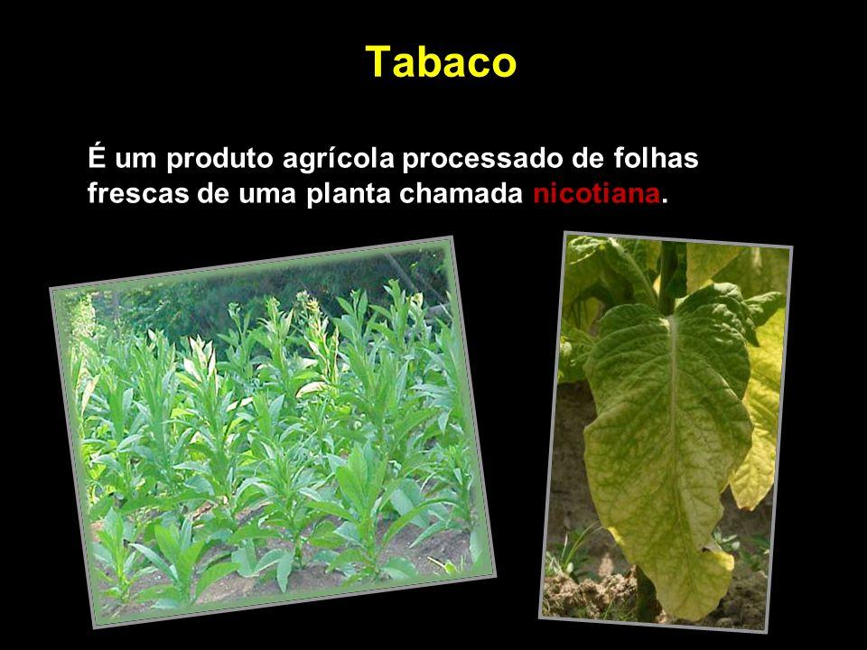 Tabaco É um produto agrícola processado de folhas frescas de uma planta chamada nicotiana.