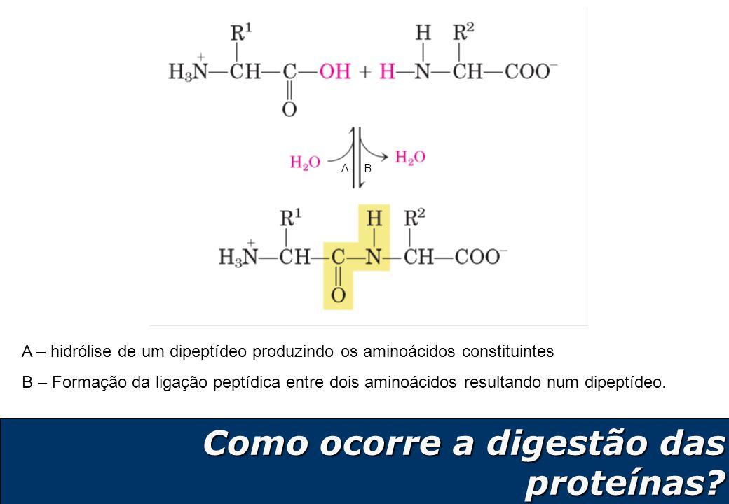 Como ocorre a digestão das proteínas