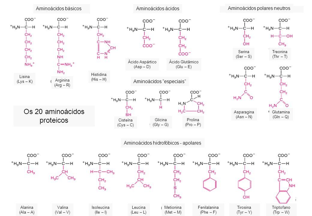 Os 20 aminoácidos proteicos