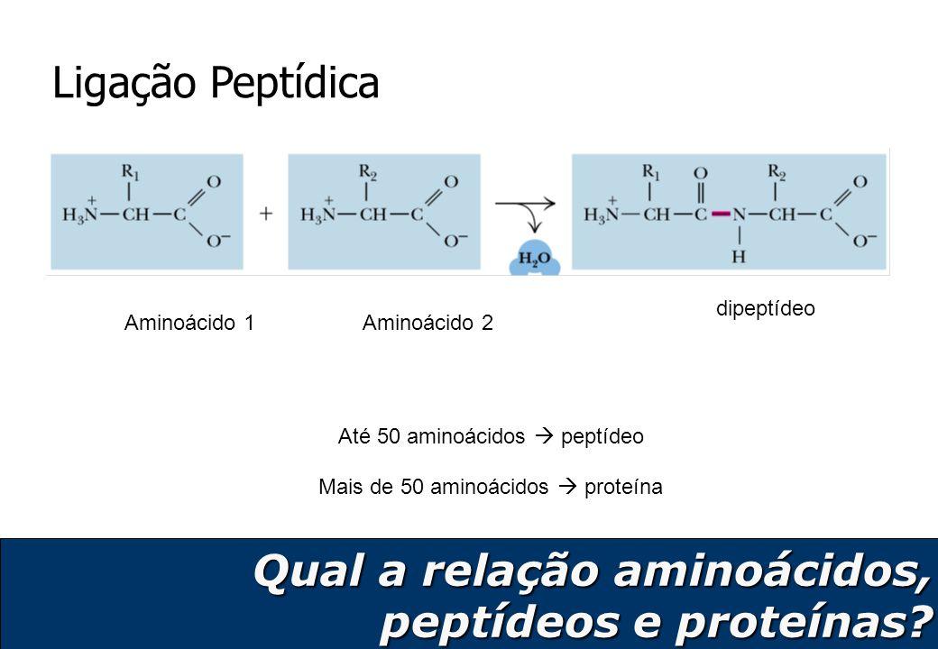 Qual a relação aminoácidos, peptídeos e proteínas