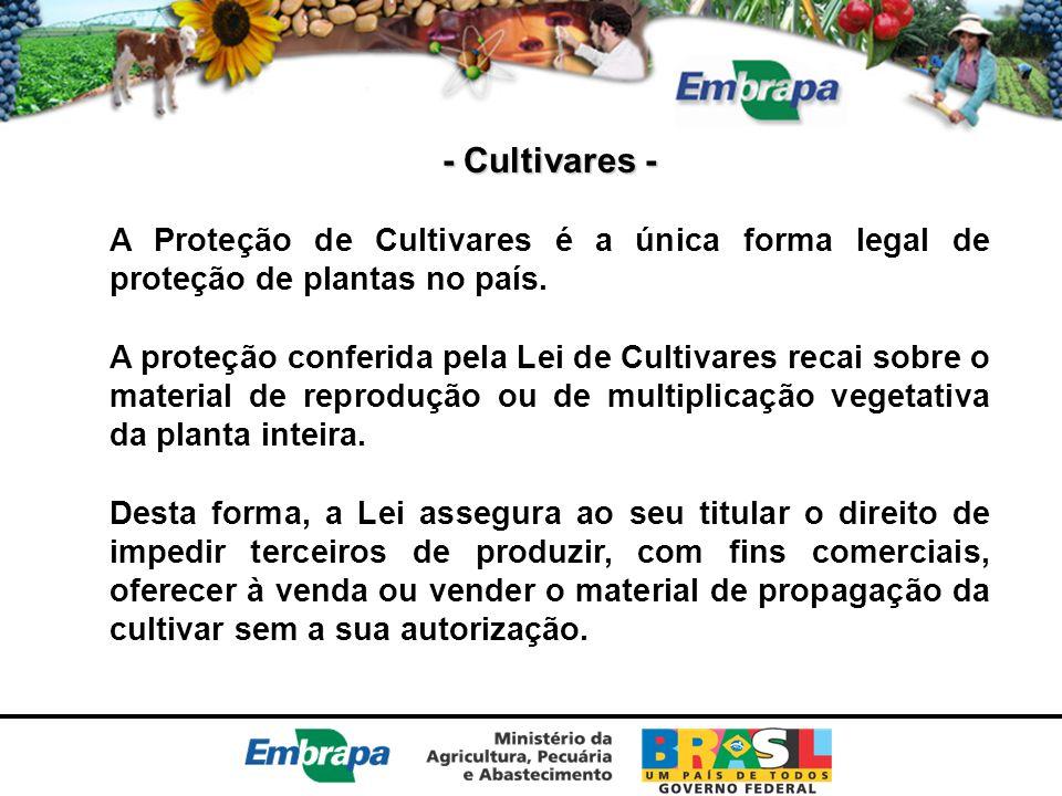 - Cultivares - A Proteção de Cultivares é a única forma legal de proteção de plantas no país.