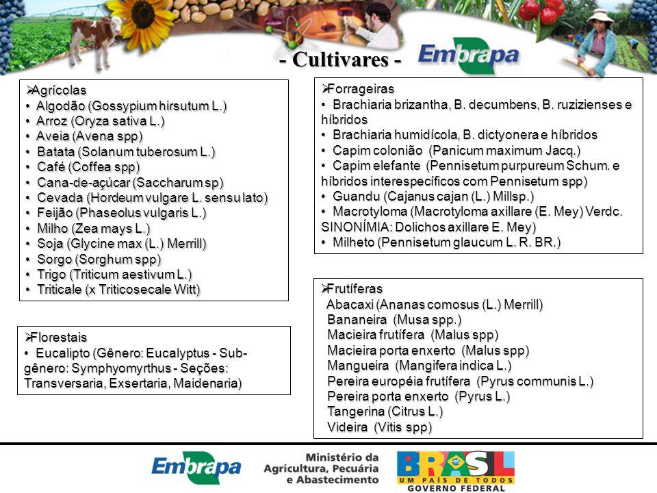 - Cultivares - Agrícolas Forrageiras Algodão (Gossypium hirsutum L.)