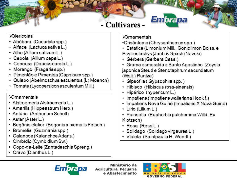 - Cultivares - Olerícolas Ornamentais Abóbora (Cucurbita spp.)