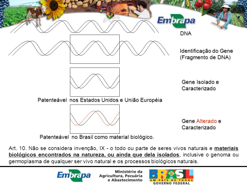 DNA Identificação do Gene. (Fragmento de DNA) Gene Isolado e. Caracterizado. Patenteável nos Estados Unidos e União Européia.
