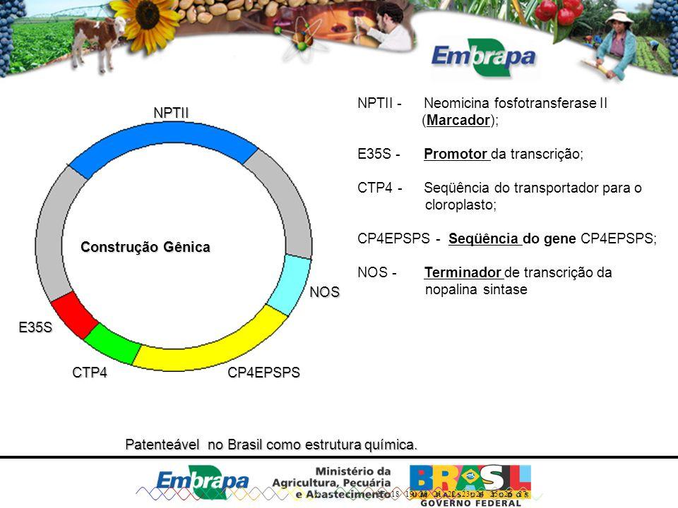 NPTII - Neomicina fosfotransferase II (Marcador);