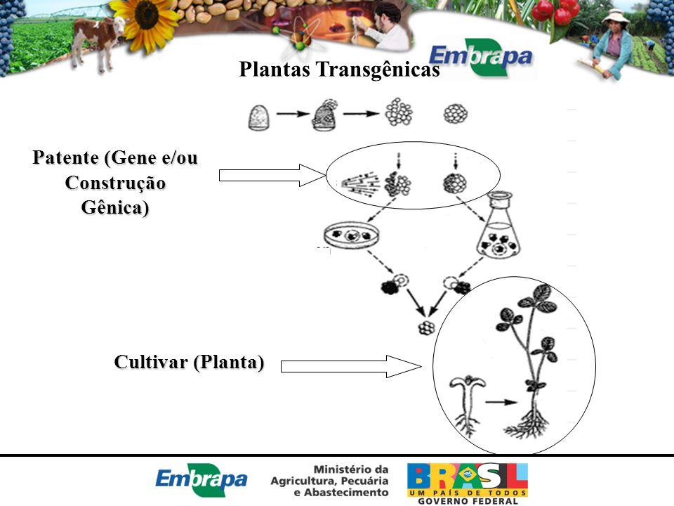 Patente (Gene e/ou Construção Gênica)