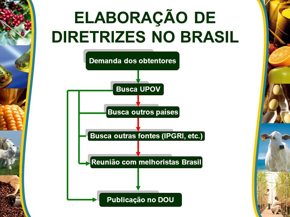 ELABORAÇÃO DE DIRETRIZES NO BRASIL