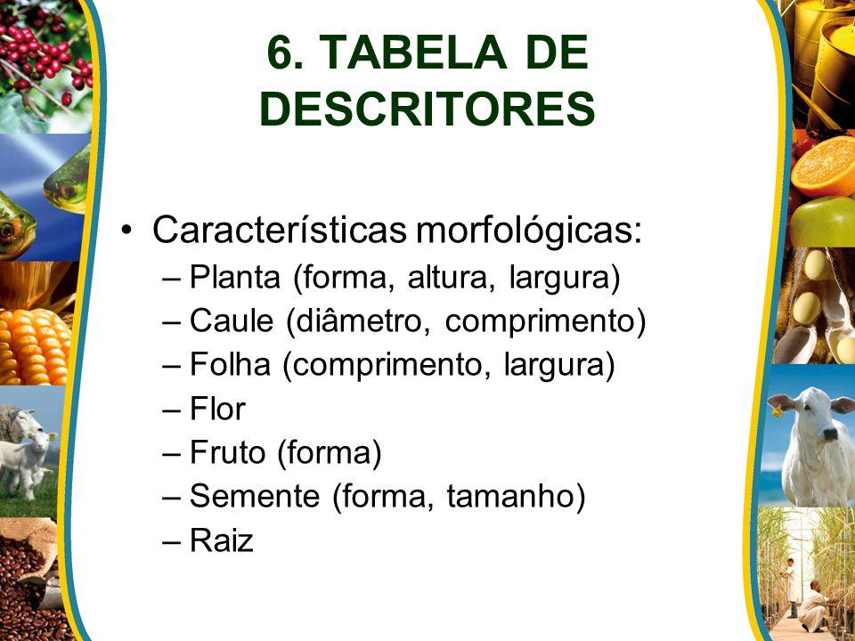 6. TABELA DE DESCRITORES Características morfológicas: