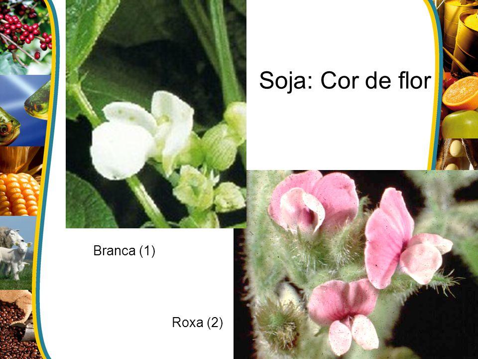 Soja: Cor de flor Branca (1) Roxa (2)