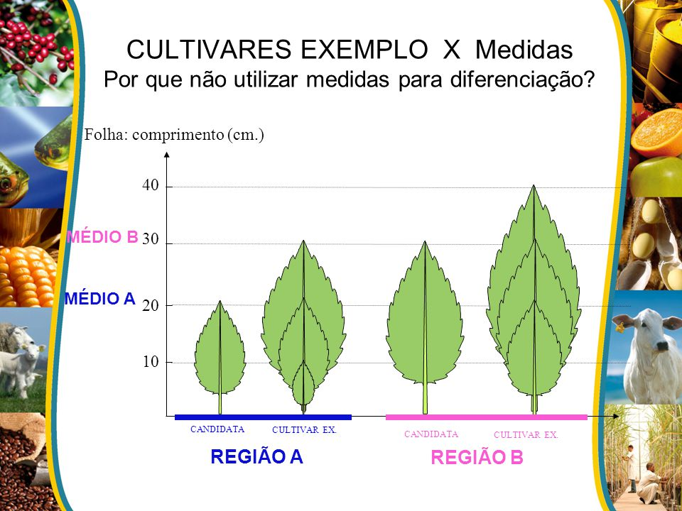 CULTIVARES EXEMPLO X Medidas Por que não utilizar medidas para diferenciação