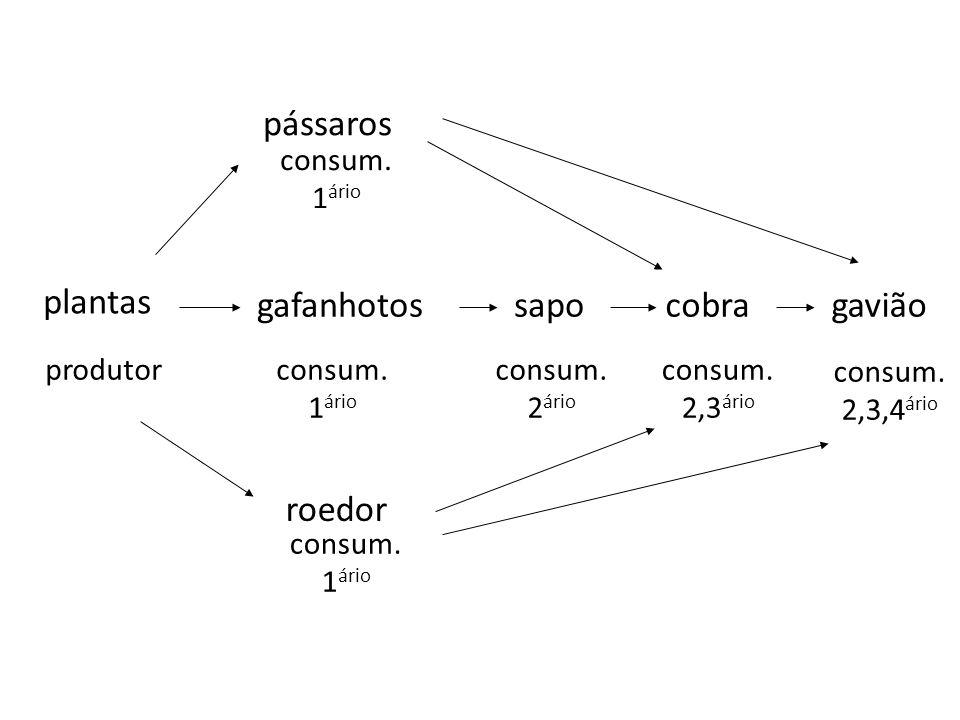 pássaros plantas gafanhotos sapo cobra gavião roedor consum. 1ário