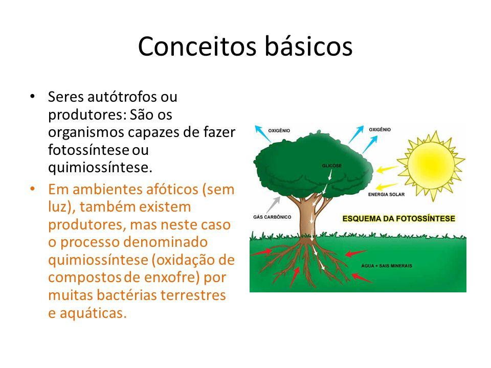 Conceitos básicos Seres autótrofos ou produtores: São os organismos capazes de fazer fotossíntese ou quimiossíntese.