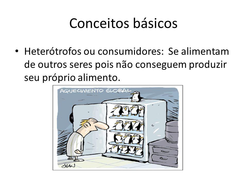 Conceitos básicos Heterótrofos ou consumidores: Se alimentam de outros seres pois não conseguem produzir seu próprio alimento.