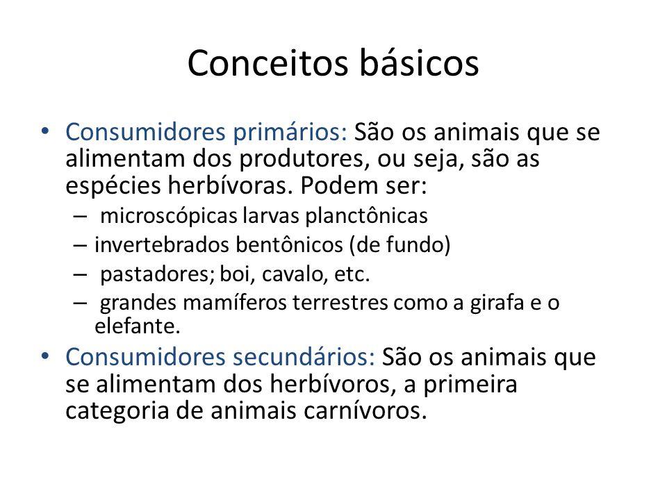 Conceitos básicos Consumidores primários: São os animais que se alimentam dos produtores, ou seja, são as espécies herbívoras. Podem ser: